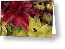Coleus And Other Plants In A Window Box Greeting Card