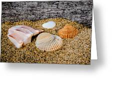 Collection Of Shells Greeting Card