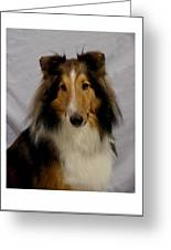 Collie 111 Greeting Card