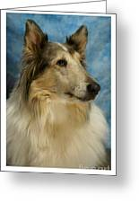 Collie 812 Greeting Card