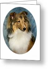 Collie 821 Greeting Card