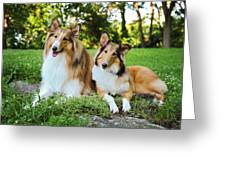 Collie Sisters Greeting Card