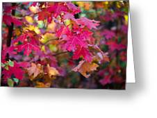 Color Greeting Card