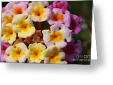 Color Explosion Flowers Greeting Card