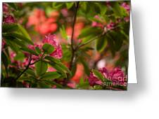 Color In The Jungle Greeting Card