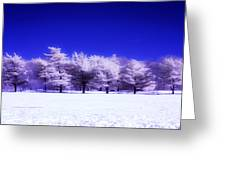 Color Infrared Winter Trees Greeting Card
