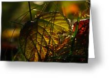 Color Jungle Greeting Card