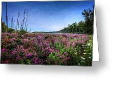Color Of Summer Greeting Card