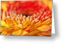 Color Of Summer II Greeting Card
