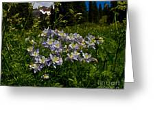 Colorado Blue Columbine At Lake Irwin Greeting Card