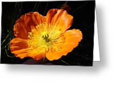 Colorado Flower Greeting Card