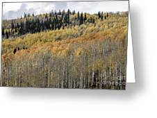 Colorado Gold II Greeting Card