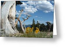 Colorado Hillside Greeting Card