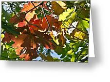 Colorado October Greeting Card