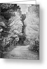 Colorado Rocky Mountain Aspen Road Portrait Bw Greeting Card