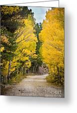 Colorado Rocky Mountain Aspen Road Portrait  Greeting Card
