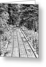 Colorado Rocky Mountain Forest Path Bw Greeting Card