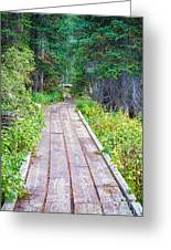 Colorado Rocky Mountain Forest Path Greeting Card