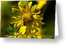 Colorado Sunflower And Visitor Greeting Card