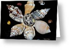 Colored Seashells Greeting Card