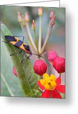 Colorful Aphid Greeting Card