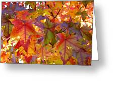 Colorful Autumn Leaves Art Prints Trees Greeting Card