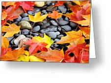 Colorful Autumn Leaves Prints Rocks Greeting Card