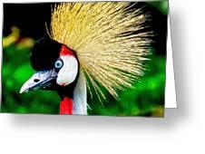 Colorful Bird Greeting Card