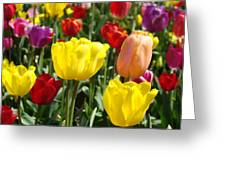 Colorful Bright Tulip Flowers Field Tulips Floral Art Prints Greeting Card