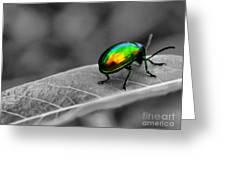 Colorful Bug Greeting Card