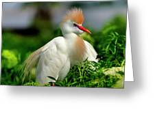 Colorful Cattle Egret Greeting Card