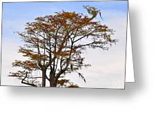 Colorful Cypress Greeting Card
