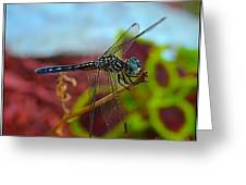 Colorful Dragon Fly Greeting Card