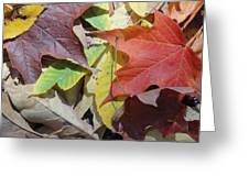 Colorful Fall Leaves Greeting Card