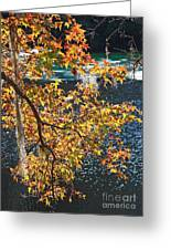 Colorful Fall Leaves Over Blue Water Greeting Card