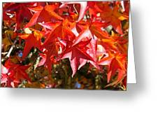 Colorful Fall Tree Red Leaves Art Prints Greeting Card