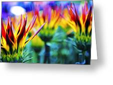 Colorful Flowers Together Greeting Card