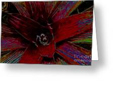 colorful Frond Greeting Card