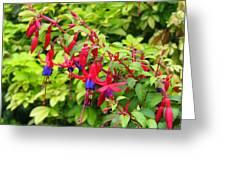 Colorful Fuchsia Greeting Card