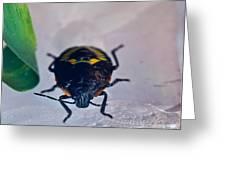 Colorful Hemiptera Nymph 1 Greeting Card