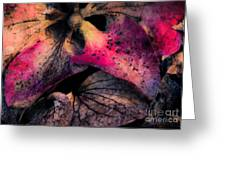 Colorful Hydrangea Abstract. Greeting Card