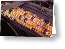 Colorful Indian Corn Greeting Card