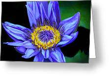 Colorful Lily Greeting Card