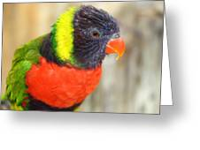 Colorful Lorikeet Parrot Greeting Card