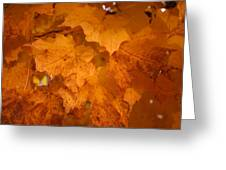 Colorful Maple Leaves In Fall Greeting Card