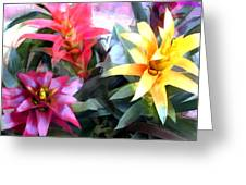 Colorful Mixed Bromeliads Greeting Card