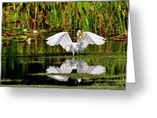 Colorful Morning At The Wetlands Greeting Card