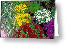 Colorful Mums Photo Art Greeting Card