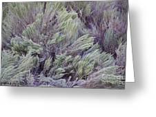 Colorful Sagebrush Greeting Card
