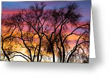 Colorful Silhouetted Trees 26 Greeting Card